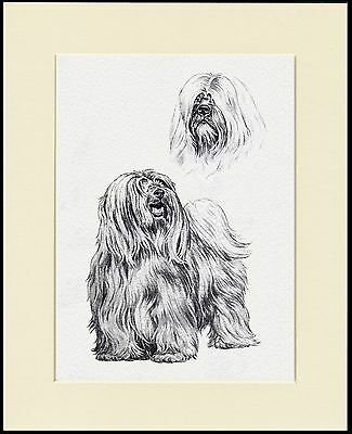 Tibetan Terrier Lovely Dog Sketch Print Mounted Ready To Frame