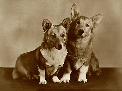 Welsh Corgi Two Dogs Lovely Dog Greetings Note Card