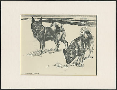 Norwegian Elkhounds Two Dogs Great Old Vintage Vernon Stokes Dog Print Mounted