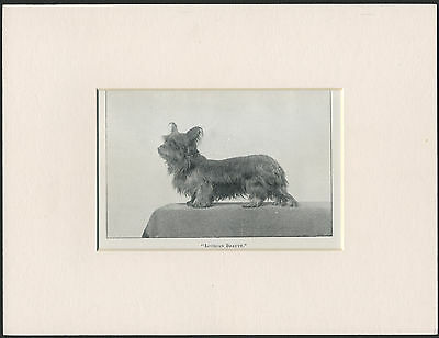 Skye Terrier Old Antique Named Dog Print Ready To Frame