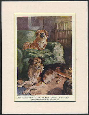 Pekingese And Collie Dogs Charming Old 1940's Dog Print Ready Mounted