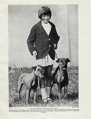 Irish Terrier Named Dogs And Girl At Belfast Show Old Original 1930's Dog Print