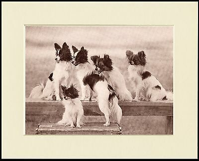 Papillon Lovely Little Dog Print Group Of Five Dogs Mounted Ready To Frame