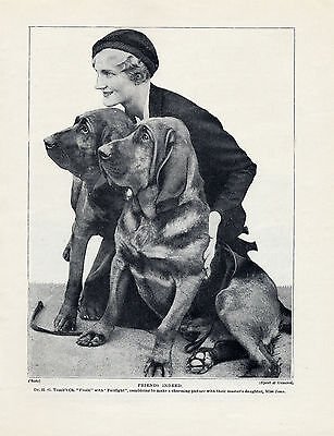 Bloodhound Lady And Dogs Lovely Original Dog Print Page From 1934