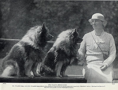 Keeshond Mrs Wingfield Digby And Her Dogs Lovely Original 1934 Dog Print