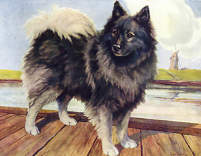 Keeshond In Canal Scene Old Dog Colour Art Print Page From 1934 By Scott Langley