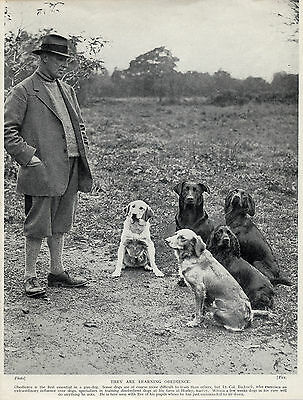 LABRADOR RETRIEVER DOGS AND OBEDIENCE TRAINER OLD ORIGINAL 1934 DOG PRINT
