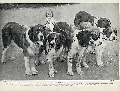 Saint Bernard Group Of Six Named Dogs And Little Girl Old 1934 Dog Print