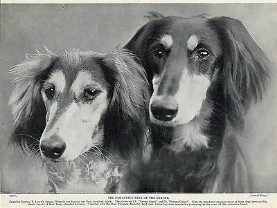 Saluki Head Study Two Named Champion Dogs Old Original Dog Print From 1935