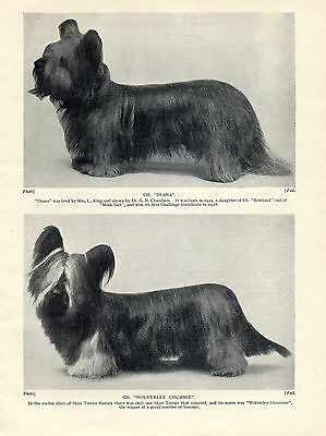 Skye Terrier Two Named Champion Dogs Old 1934 Dog Print