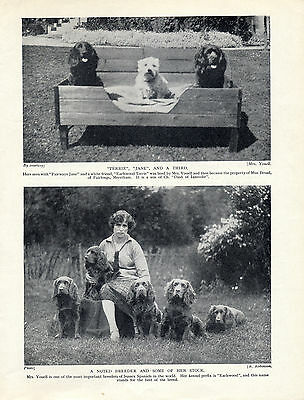 "Sussex Spaniel A Well Know Breeder And Her ""earlswood"" Dogs Old 1934 Dog Print"