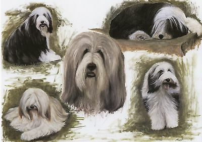 "BEARDED COLLIE SHEEPDOG DOG ART LIMITED EDITION PRINT - ""Beardie Sketches"""