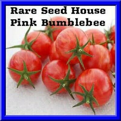 Rare Pink BumblebeeTomato Seeds! Comb.S/H WE SELL 7 KINDS OF BUMBLEBEE TOMATOES!