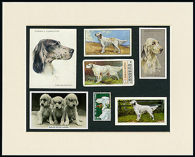 English Setter Mounted Set Of Vintage Dog Collectable Cards And Stamps Nice Gift