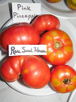 Pink Pineapple Tomato -  20 Seeds! Large sweet fruit! Comb. S/H See our store!