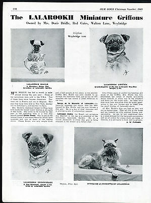 Brussels Griffon Our Dogs Old 1948 Dog Breed Kennel Advert Print Page