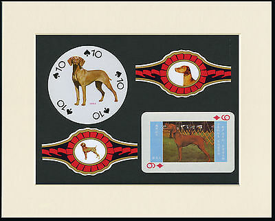 Hungarian Vizsla Mounted Set Of Vintage Dog Collectable Cards And Bands