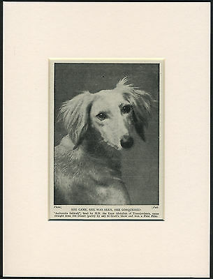 SALUKI HEAD STUDY NAMED DOG OLD 1930's DOG PRINT MOUNTED READY TO FRAME