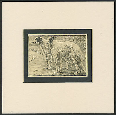 Borzoi  Vintage 1930's Collectable Dog Cigarette Card Ready Mounted