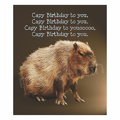 Happy Birthday Magnet for Capybara Fans Capy Birthday to You!