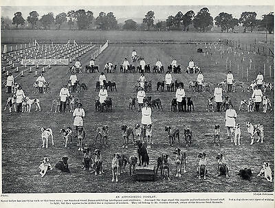 Great Dane 100 Dogs Of The Send Kennels Great Image Old Original 1934 Dog Print
