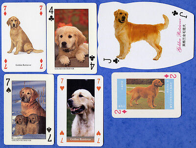 Golden Retriever Dog Playing Swap Single Cards Great Gift When framed