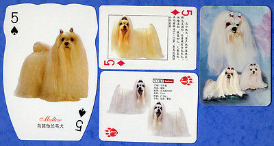 Maltese Dog Playing Swap Single Cards Great Gift When framed