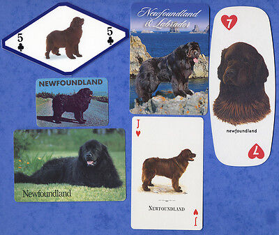 Newfoundland Dog Playing Swap Single Cards Great Gift When framed
