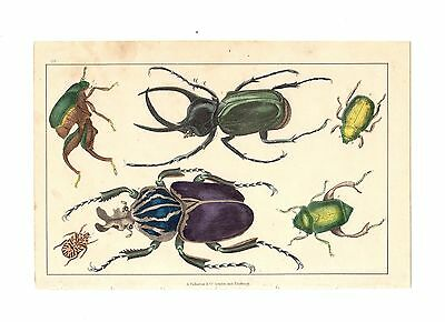 1866 GOLDSMITH Antique Hand Coloured Print ~ ENTOMOLOGY Beetles INSECTS # 1