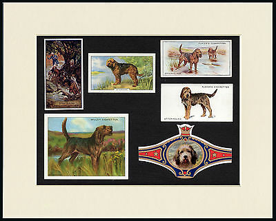 Otterhound Mounted Set Of Vintage Dog Collectable Cards And Bands Great Gift