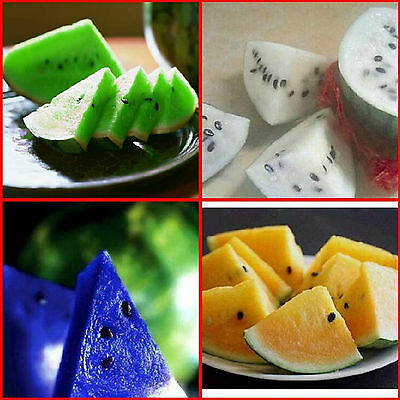 10pcs 6 color Sweet Watermelon Seeds Delicious Fruit Garden Seed Variety Plants