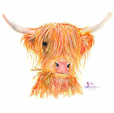 HIGHLAND COW PRINTS of Original Watercolour Painting FERGUS by SHIRLEY MACARTHUR