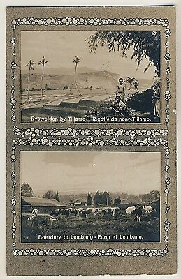 Indonesia RICEFIELDS Tjilame / Lembang CATTLE FARM * Vintage 10s Photo PC