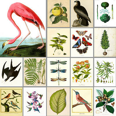 VINTAGE ART PRINTS: Birds, Botanical, Garden: BUY 3 GET 4th FREE! (A4/A3 Sizes)