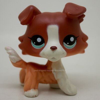 #1542 Littlest Pet Shop Brown Collie Dog Puppy Blue Eyes Figure LPS Loose Toy