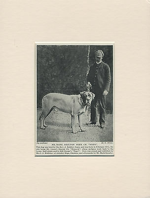 Mastiff Named Champion Dog And Owner Old 1930's Print Mounted Ready To Frame