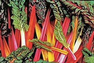 Swiss Chard Rainbow Mixture Garden Heirloom Vegetable 50 Seeds