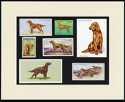 Irish Setter Mounted Set Of Vintage Dog Collectable Cards And Stamps