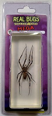 DeAGOSTINI MEGA REAL BUGS WASP SPIDER IN LUCITE RESIN SCORPION SPIDER ENTOMOLOGY
