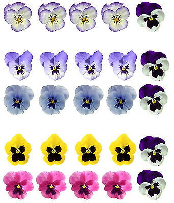 25 Beautiful Mixed Colour Pansy Flower Edible Wafer/Rice Paper Cupcake Toppers