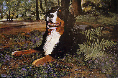 """BERNESE MOUNTAIN DOG FINE ART LIMITED EDITION PRINT - """"Off the Beaten Track"""" BMD"""