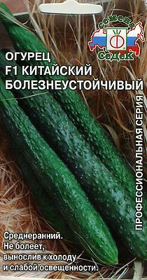 "Cucumber ""Chinese disease-resistant"" F1 Russian High Quality seeds"