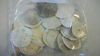 """Lot Of 25 White Sand Dollars Various Sized From 2-4"""""""