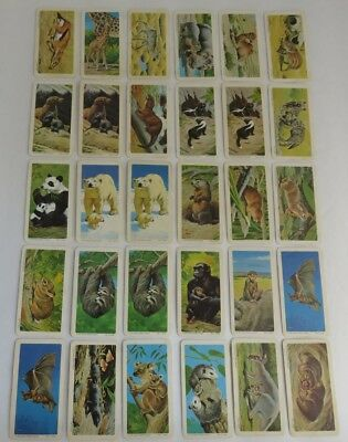 (30) Animals And Their Young Brooke Bond Cards     (Inv2125)