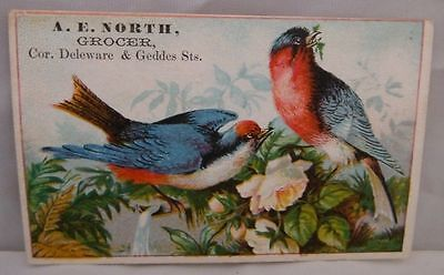 A.e. North, Grocer Trade Card