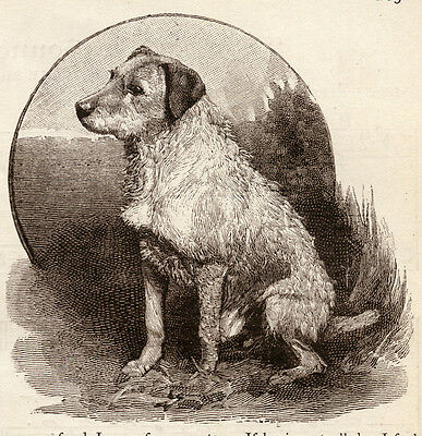 """IRISH TERRIER DOG ANTIQUE ART PRINT ENGRAVING """"Red Paddy - A Dog's Tale"""" 1890"""