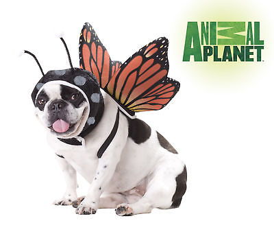 Butterfly Dog Fairy Costumes Animal Planet Insect