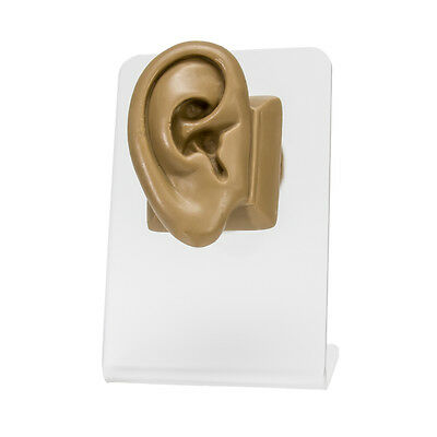 Realistic Adult-Sized Silicone Right Ear Display - Tan Body Bit Version 2
