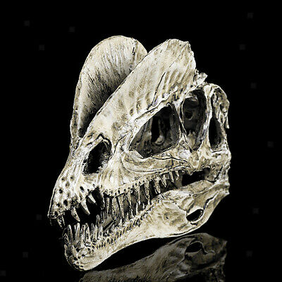 Dinosaur Dilophosaurus Skull Replica Skeleton Model Aquarium Ornament White