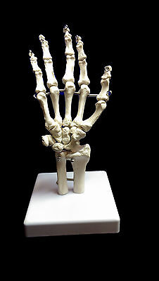 @Professional Full Size Human Hand Skeleton Model@High Quality@UK Seller@